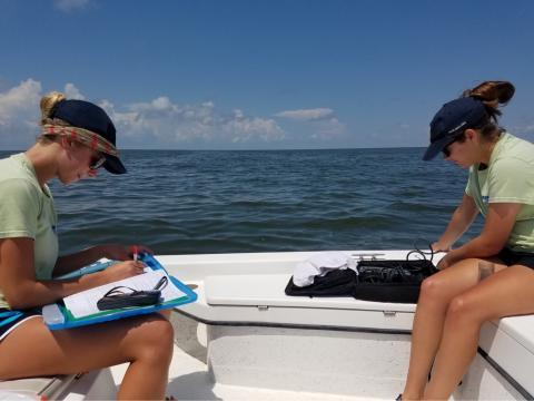 Kat (left) helped identify bottlenose dolphins this summer